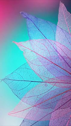 cotton candy leaves