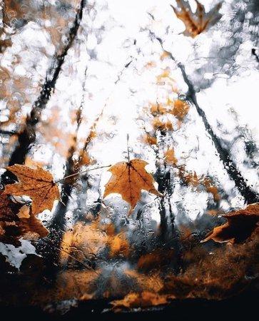 fall rain autumn aesthetic
