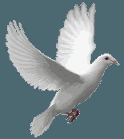 Flying Dove transparent PNG - StickPNG