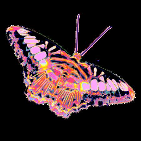 butterfly holo holographic Sticker by Dinaaaaaah