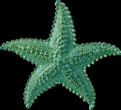 starfish - Google Search