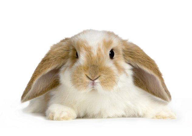 Bunny Basics | Pets 4 Life