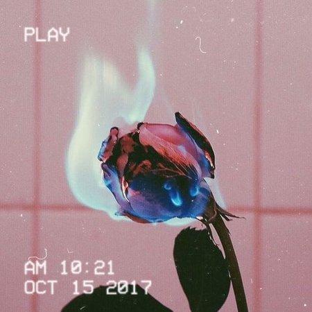 Vhs fire rose