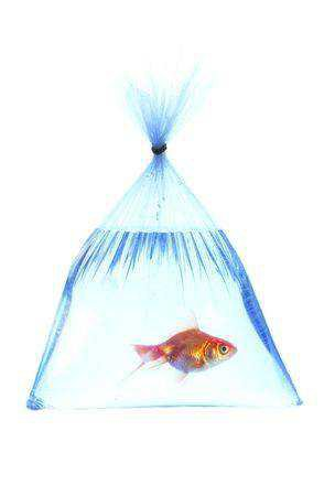High Resolution Fish In A Platic Bag On White Background Stock Photo, Picture And Royalty Free Image. Image 4962548.