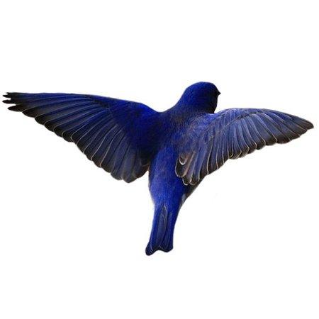 blue bird filler png