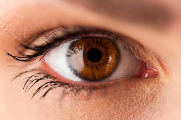 Top Brown Eyes Stock Photos, Pictures and Images - iStock