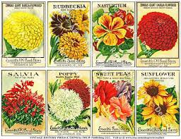vintage seed packets - Google Search