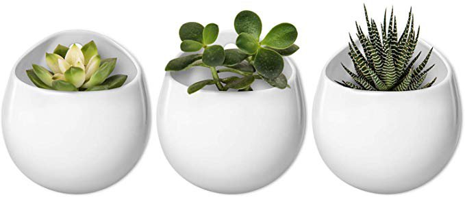 Amazon.com: Mkono 4 Inch Wall Mounted Planter Round Ceramic Hanging Plant Holder Decorative Flower Display Vase Succulent Pots for Indoor Plants, Set of 3, White (Plants NOT Included): Garden & Outdoor