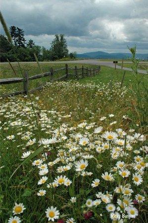 daisy flower nature aesthetic