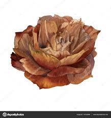 rose brown watercolor - Google Search