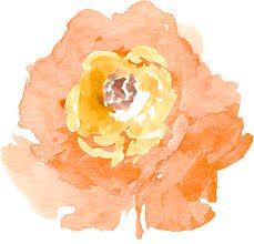 watercolor orange - Google-keresés