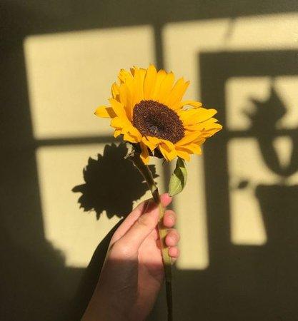 yellow sunflower aesthetic