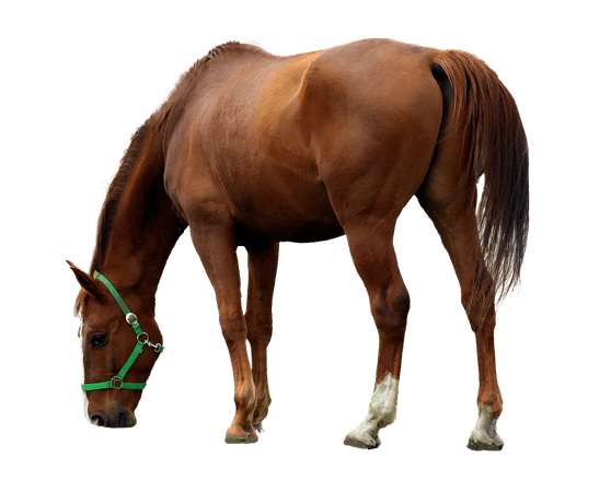 horse-3424603_960_720.png (893×720)