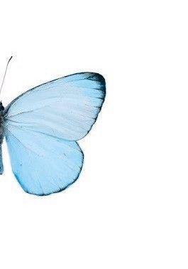 blue half butterfly