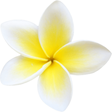 Plumeria Clipart (Icon Supplies)
