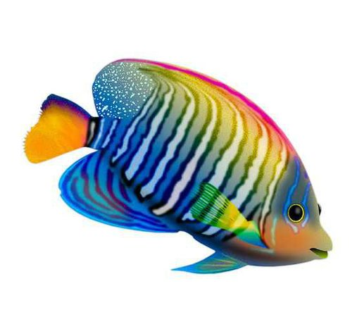 Multicolor Fish - Pinterest
