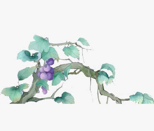grape vines and leaves watercolor - Google Search