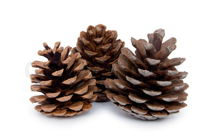 Pine cones isolated on white background | Stock Photo | Colourbox