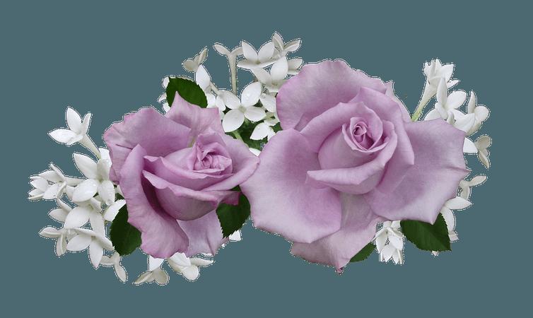 Mauve Rose With · Free photo on Pixabay