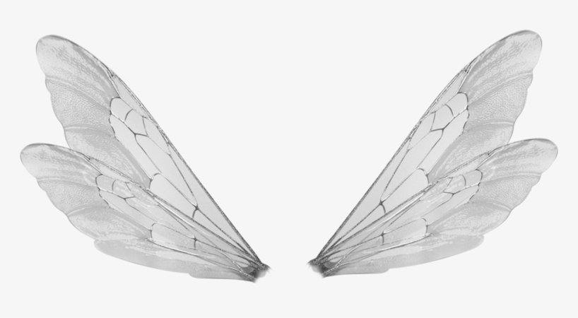 White Fairy Wings