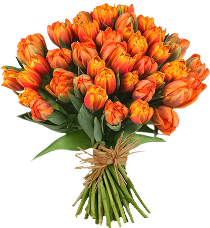 tulips bouquet png - Google Search