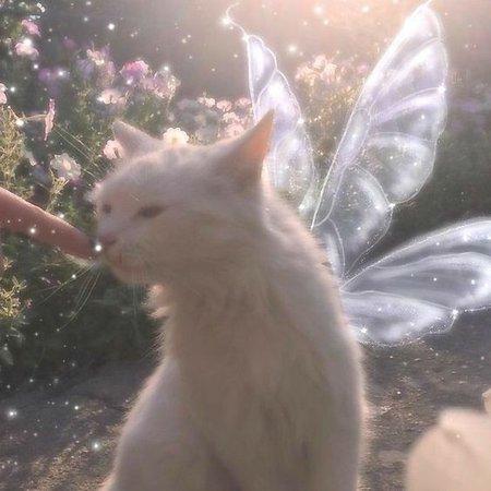 cute cat magic