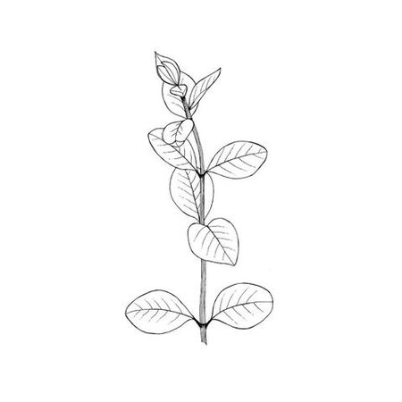 10 Different Ways to Draw - Leaves – Lomond Paper Co.