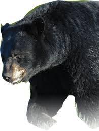 bear png tube black - Google Search