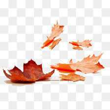 fall leaf - Google Search