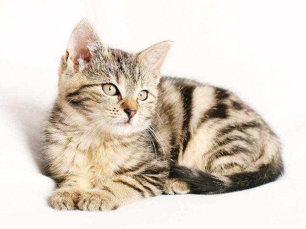 Cat Pet Striped · Free photo on Pixabay