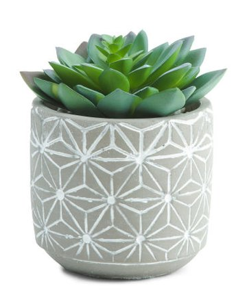 Faux Succulents In Oval Pattern Cement Pot - Living Room - T.J.Maxx