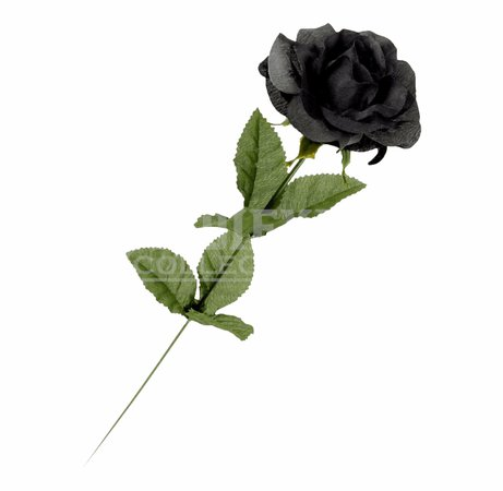 Real Single Black Rose Free PNG Images & Clipart Download #834515 - Sccpre.Cat