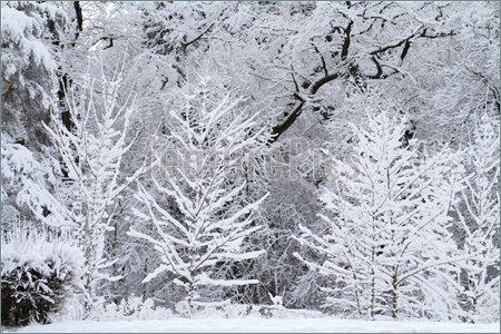 Image Of Snow Scene
