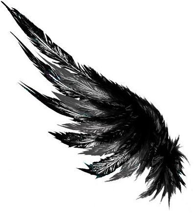 black feather wing art filler png