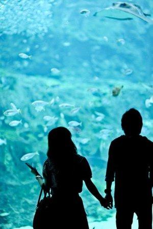 Aquarium Date