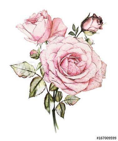 watercolor flower pink - Google Search