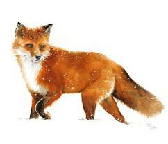 fox illustration - Google Search