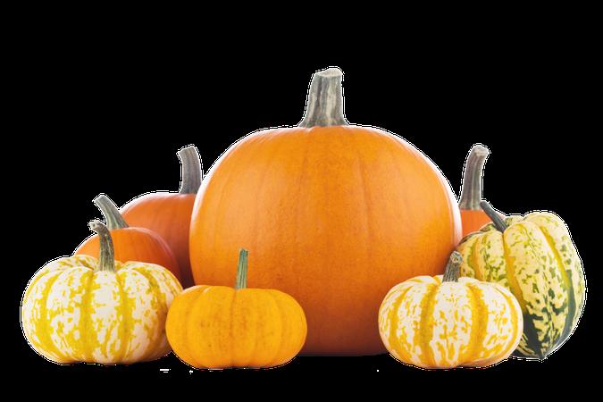 pumpkin_PNG86739.png (1200×800)