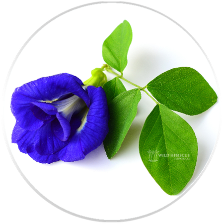 b'lure Flower Extract | Butterfly Pea Flower | All Natural