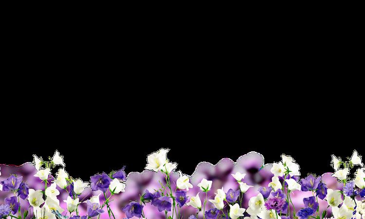 flowers floor grassflower purple whitelandscape...
