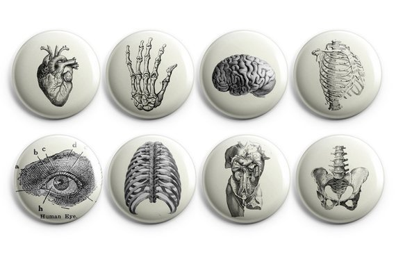 Vintage anatomy buttons Anatomy fridge magnets 1.25
