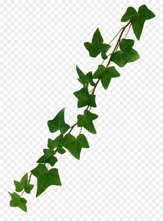 kisspng-common-ivy-stock-photography-vine-clip-art-ivy-5abd144def1b62.2117020015223409419794.jpg (900×1220)