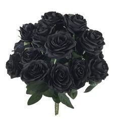 DALAMODA Black Open Roses bush