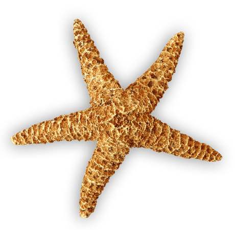 Starfish clipart realistic Pencil and in color starfish Clipart - Free Clipart