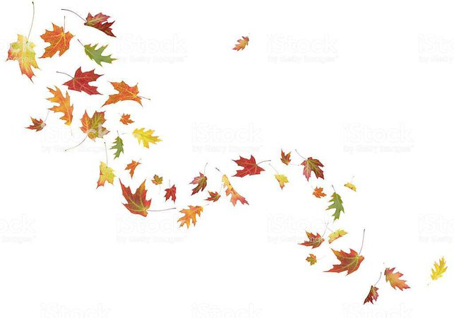 wind fall swirling leaves - Google Search