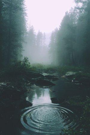 Tumblr Aesthetic Forest - Vtwctr Vtwctr Aesthetic Dark Forest Tumblr