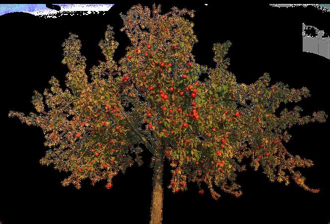 Apple Tree Leaves - Free photo on Pixabay