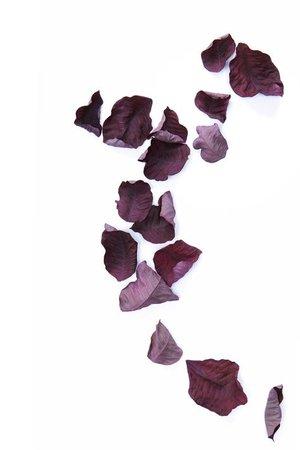 purple leaves png filler moodboard