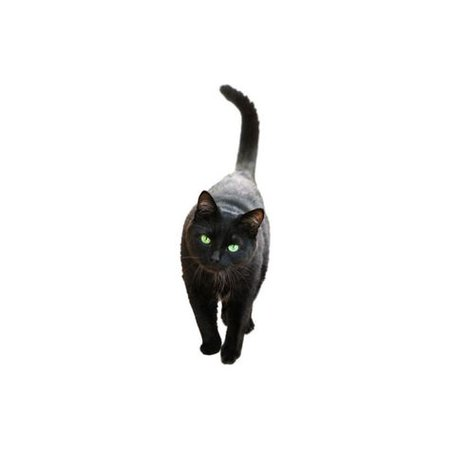black cat png filler