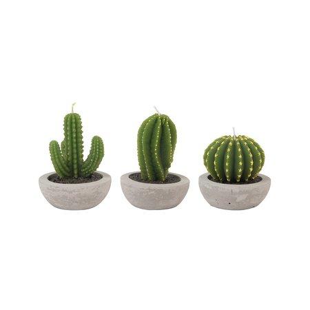 Elm - Candle - Cactus.